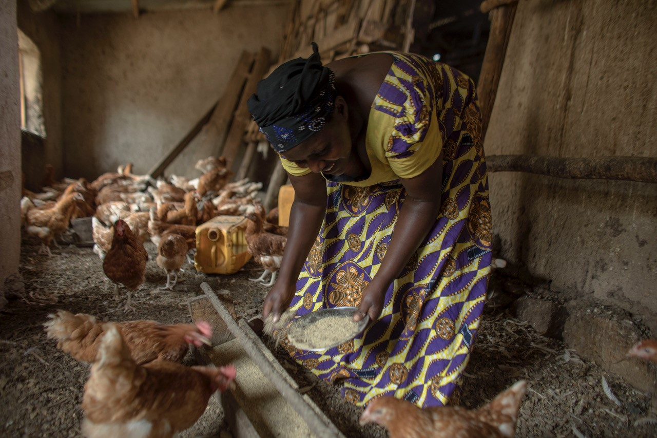 Brigitte's farm has more than 1,000 chickens that she cares for on a daily basis. Photo: Josh Estey/CARE
