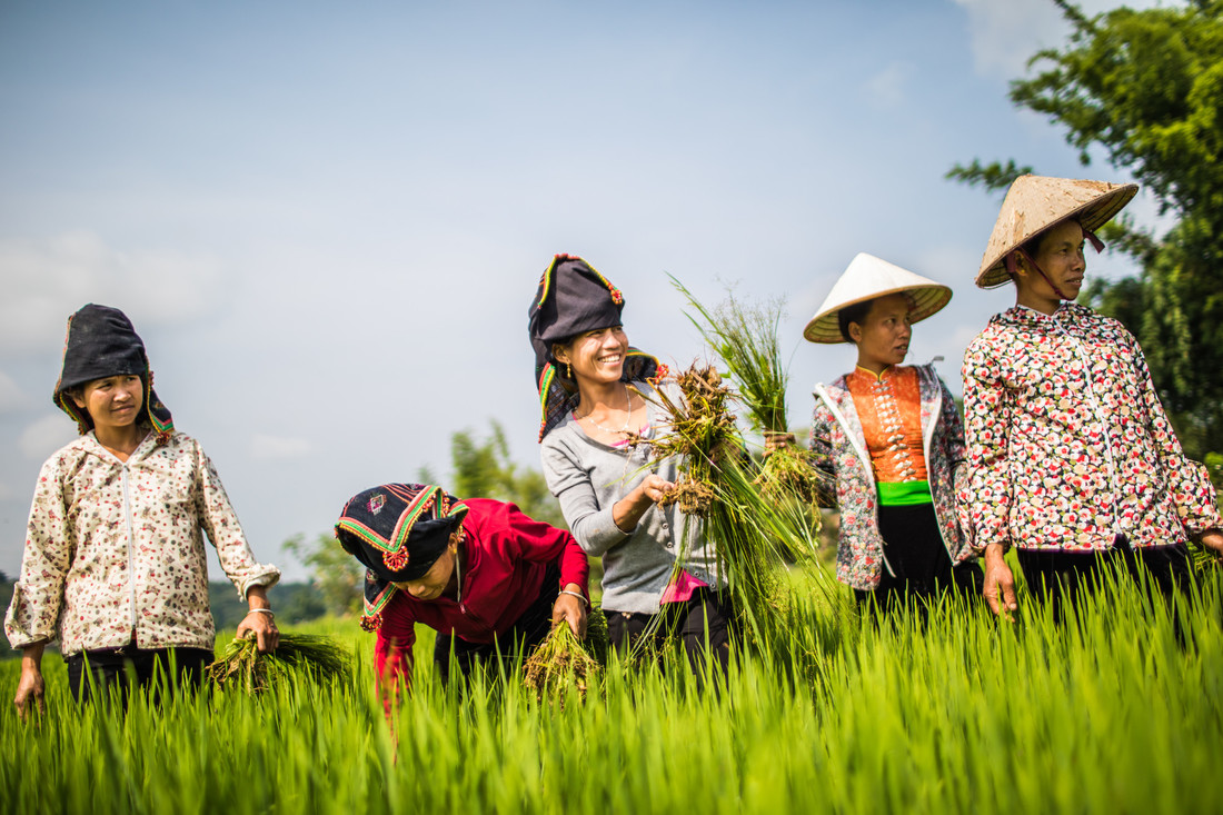 A group of women wearing hats work in a field.