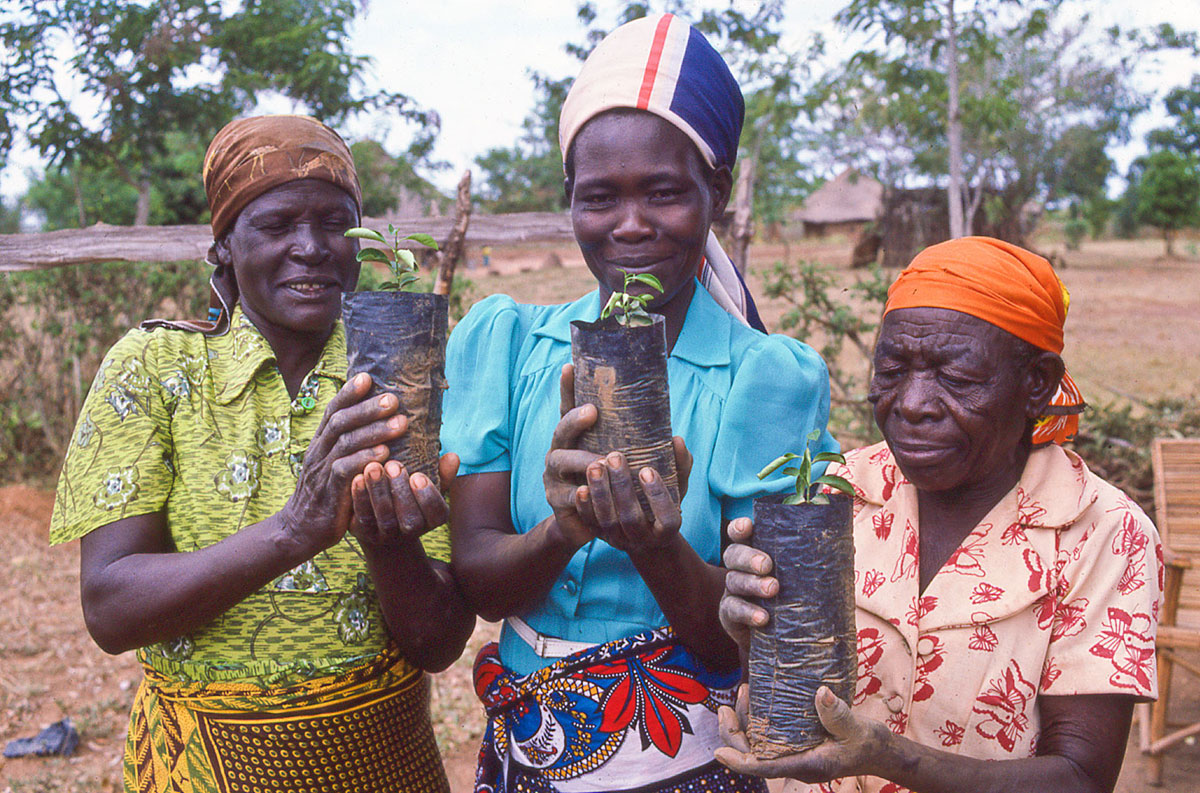 Three Kenyan women wearing green, blue, and orange hold up young plants.