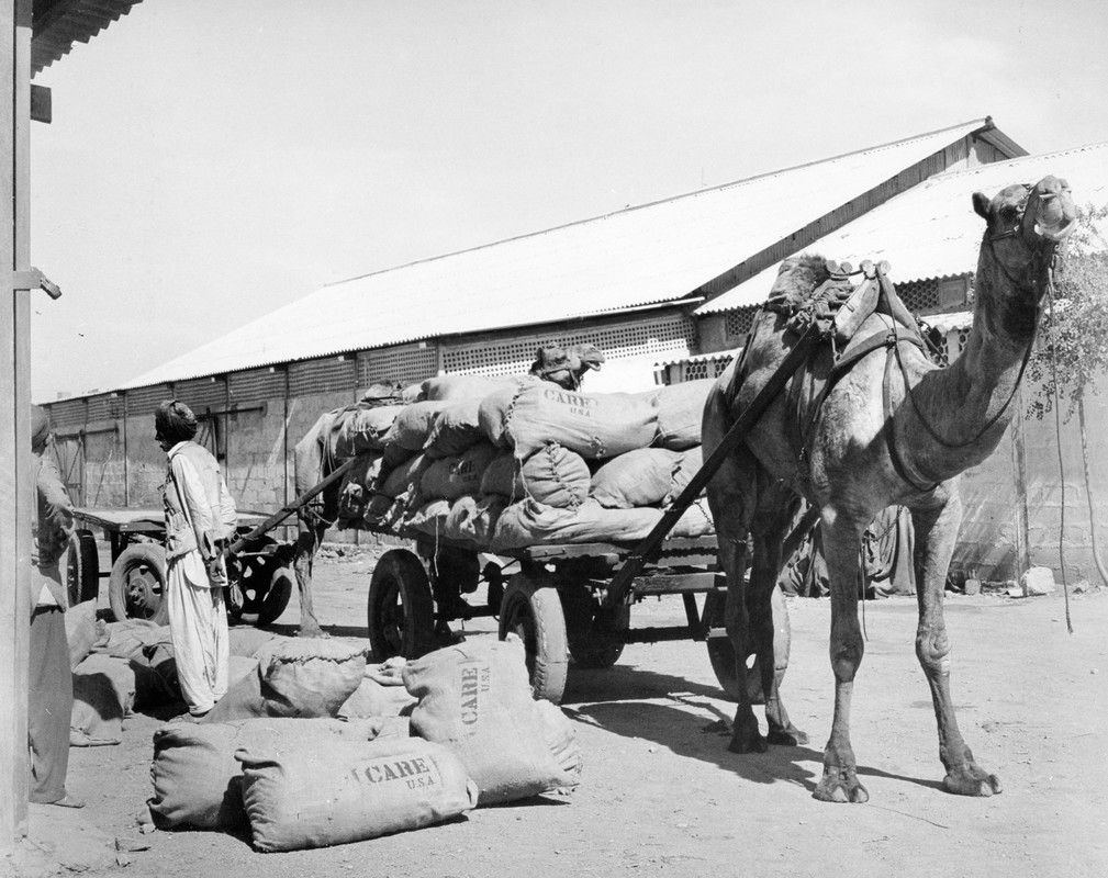 A cart pulled by a camel is stopped at a building. Beside the cart are multiple large food bags labeled,