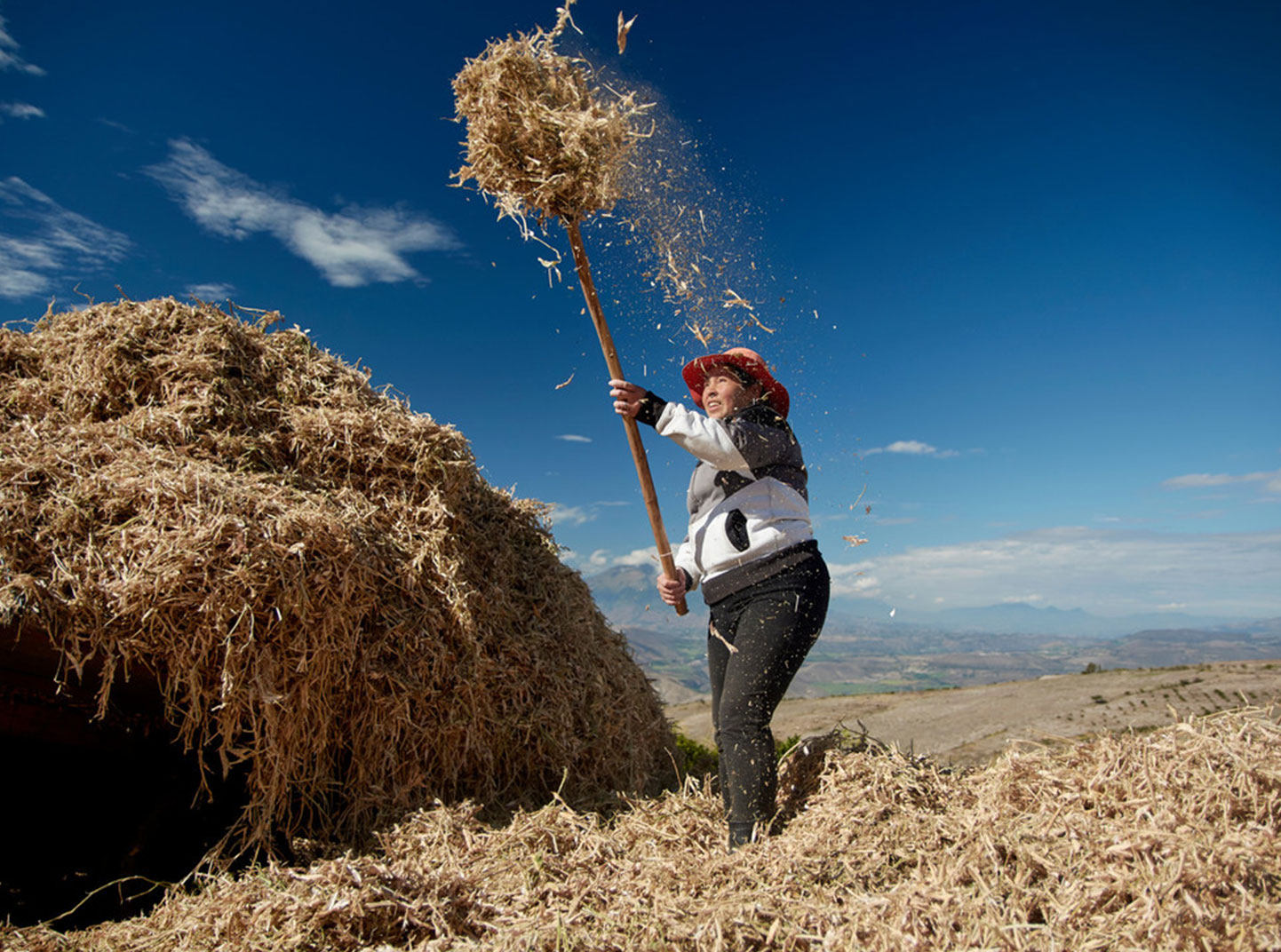 A woman bales hay in a field.
