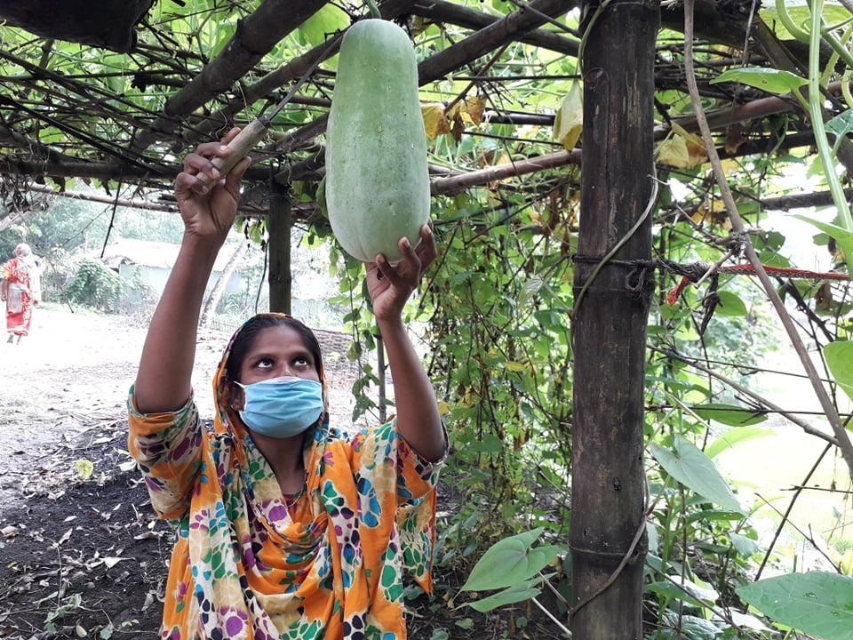 A woman in a face mask holds a knife while cutting a vegetable from a vine.