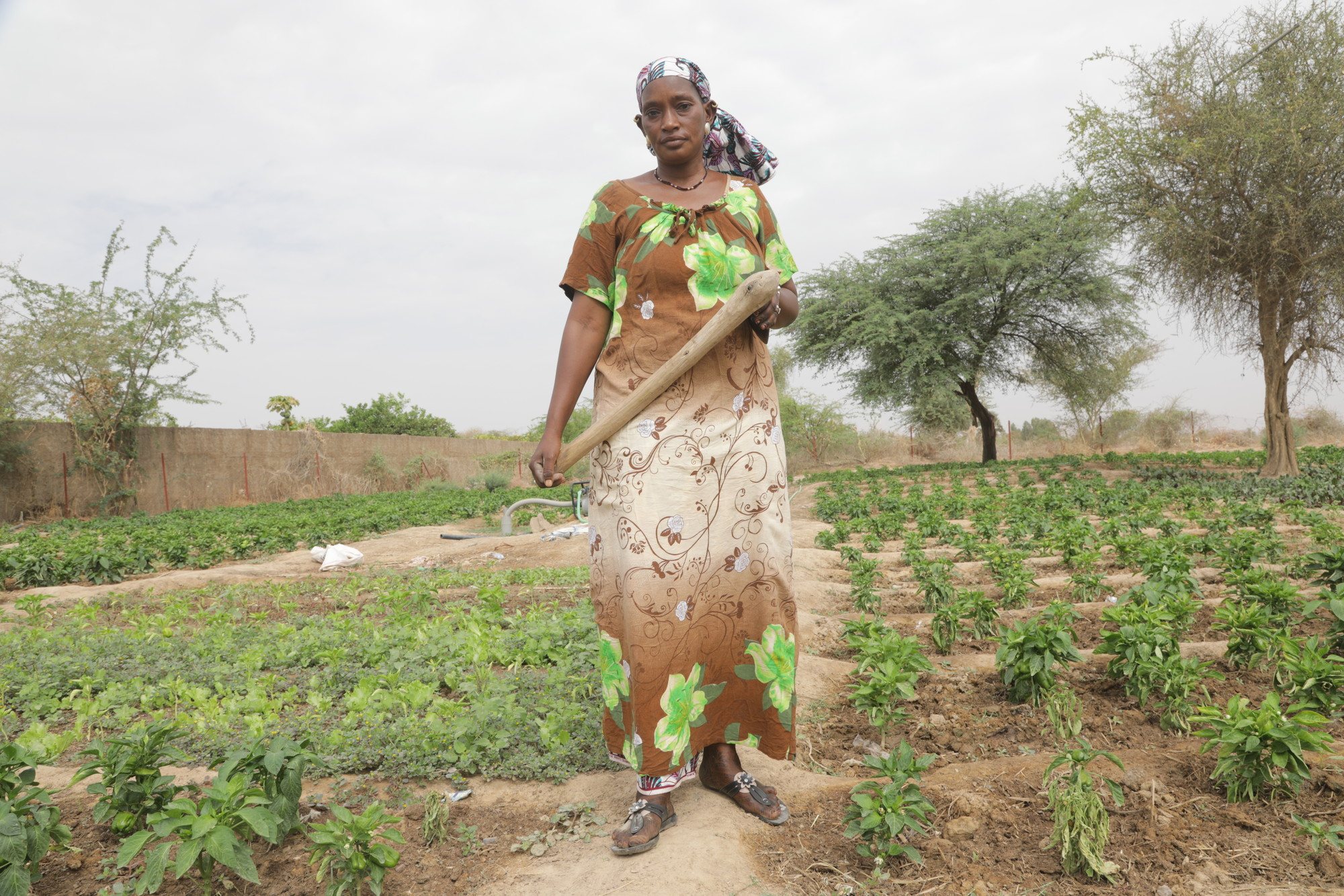 A woman stands in a field with a farming tool.