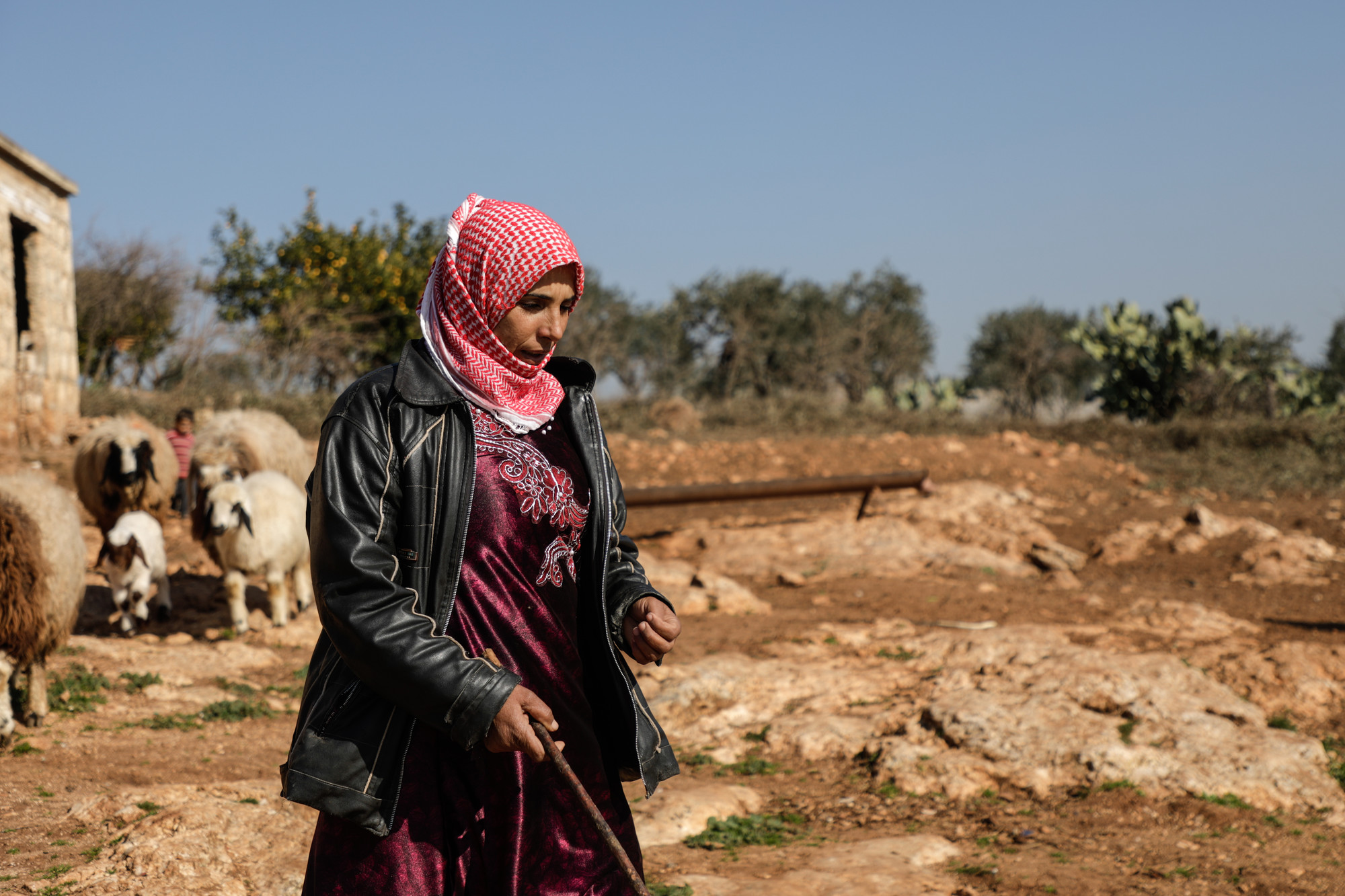 A woman holds a staff while herding sheep.