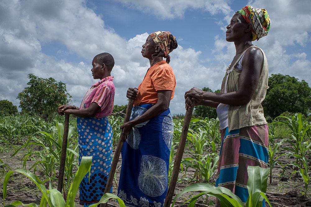 Un perfil lateral de tres mujeres de pie en una fila y erguidas mientras descansan sus manos sobre herramientas agrícolas de madera. Están de pie en un campo verde lleno de cultivos en un día soleado.